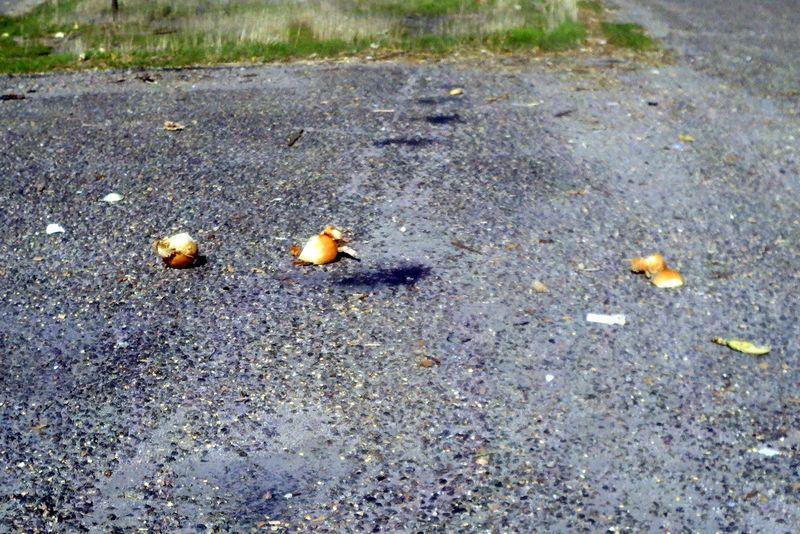 Onionroad